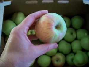 A1 Making Applesauce