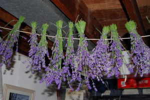 DSC 40541 300x200 Dried Lavender Bunches