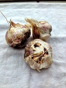 Pick bulbs with big cloves.