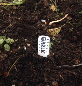 Label clearly where you have planted as it's easy to overplant.