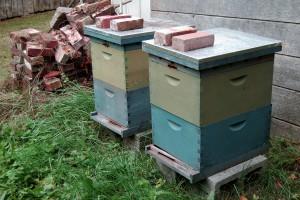 bees 300x200 Community Builder Jessica Breznau
