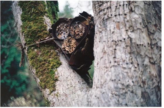 More nest options.